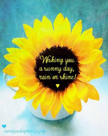 SunflowerSunnyDay